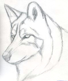 simple wolf sketch dog drawing easy simple wolf drawing easy realistic drawings super