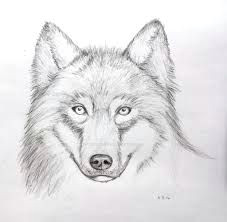 image result for easy drawings of wolves in pencil wolf face drawing face pencil drawing