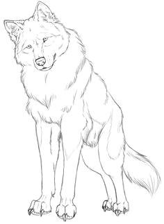 wolf linart