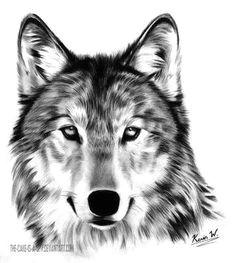 wolf hunde wolf bilder tiere zeichnen tattoo vorlagen tattoo ideen zeichnungen