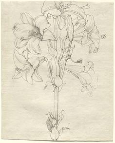 caspar david friedrich drawing grid plant art william blake national gallery of