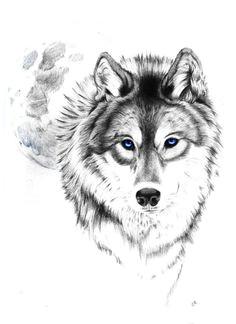 wolf drawing traum tattoos coole tattoos schafe tattoo engel tattoo vorlagen wolf