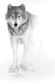 Wolf Drawing Hand 180 Best Wolf Drawings Images Drawing Techniques Drawing
