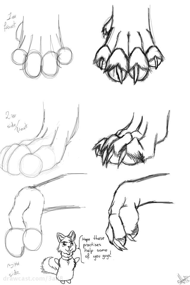 how to draw wolf paws plus ad