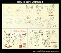 wolf head tutorial by nataliedecorsair deviantart com on deviantart furry art drawing