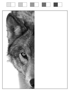 finish the wolf project template print it off and have kids test their shading in