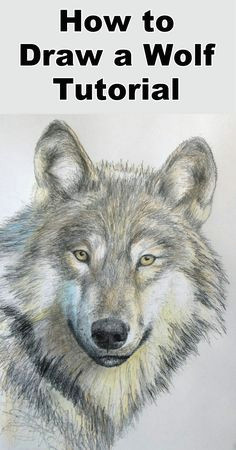 how to draw a wolf in pencil