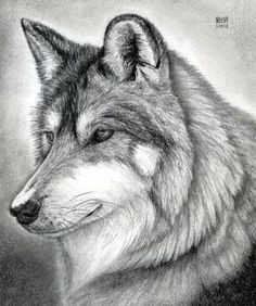 how to draw a wolf free online drawing tutorial added by finalprodigy january pm