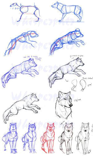 grrrreat art techniques for sketching a wolf just remember to keep him on the page