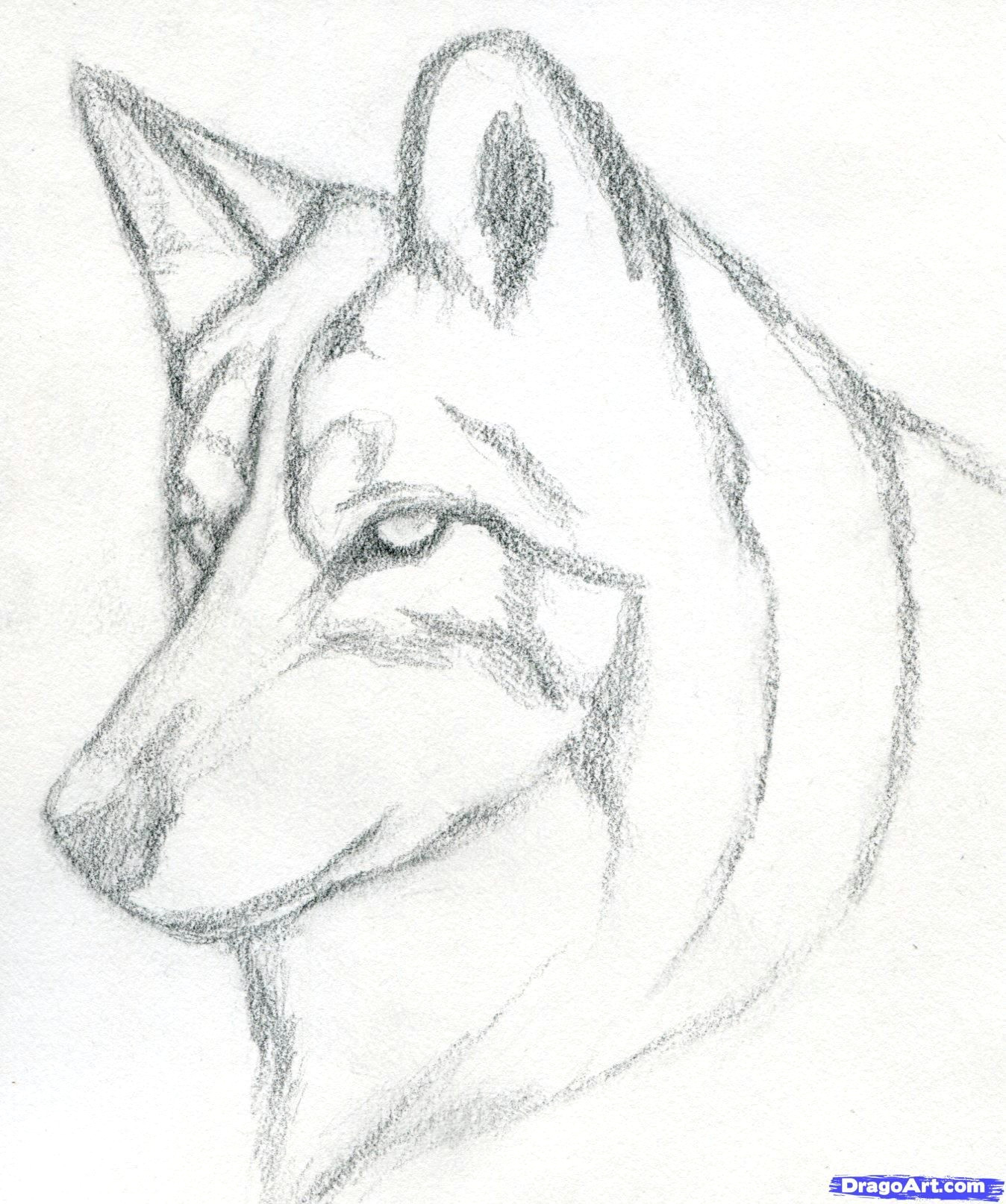 Wolf Drawing Made Easy How to Draw A Wolf Head Mexican Wolf Step 3 Drawings Pinterest