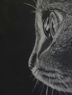 close up of a cat in white charcoal on black paper mas pencil drawings of animals