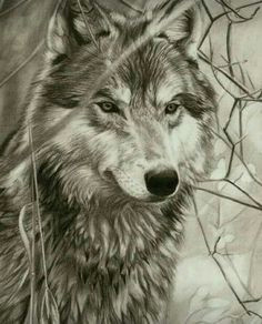 hyper realistic pencil drawings and sketches by 41