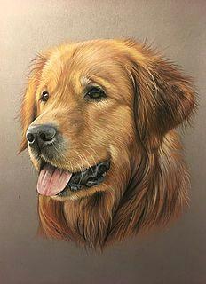 golden retriever pastel goldenretrievercolors colored pencil portrait pencil art pastel pencils wolf