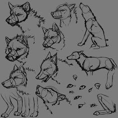 wolf anatomy 3 by jaumaruyama on deviantart