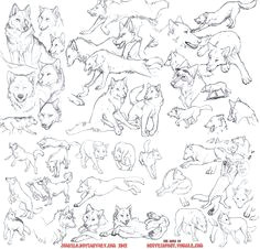 fucktonofanatomyreferences a majestic fuck ton of wolf references per request note that in the bottom image a few of the sketches are not