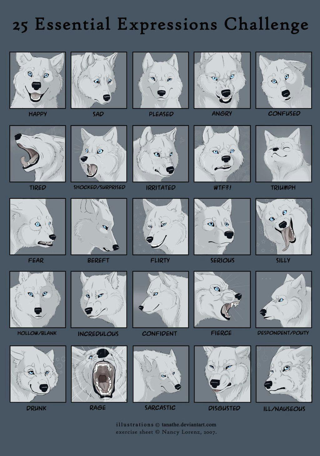 25expressions challenge wolf by tanathe deviantart com on deviantart