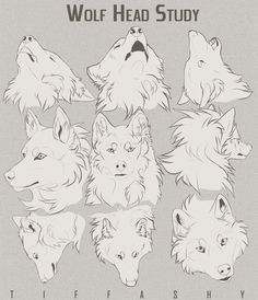 wolf head study tutorial