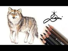 wolf zeichnen lernen wolfzeichnung how to draw a wolf kd do n dµ n d n n d d d n d do