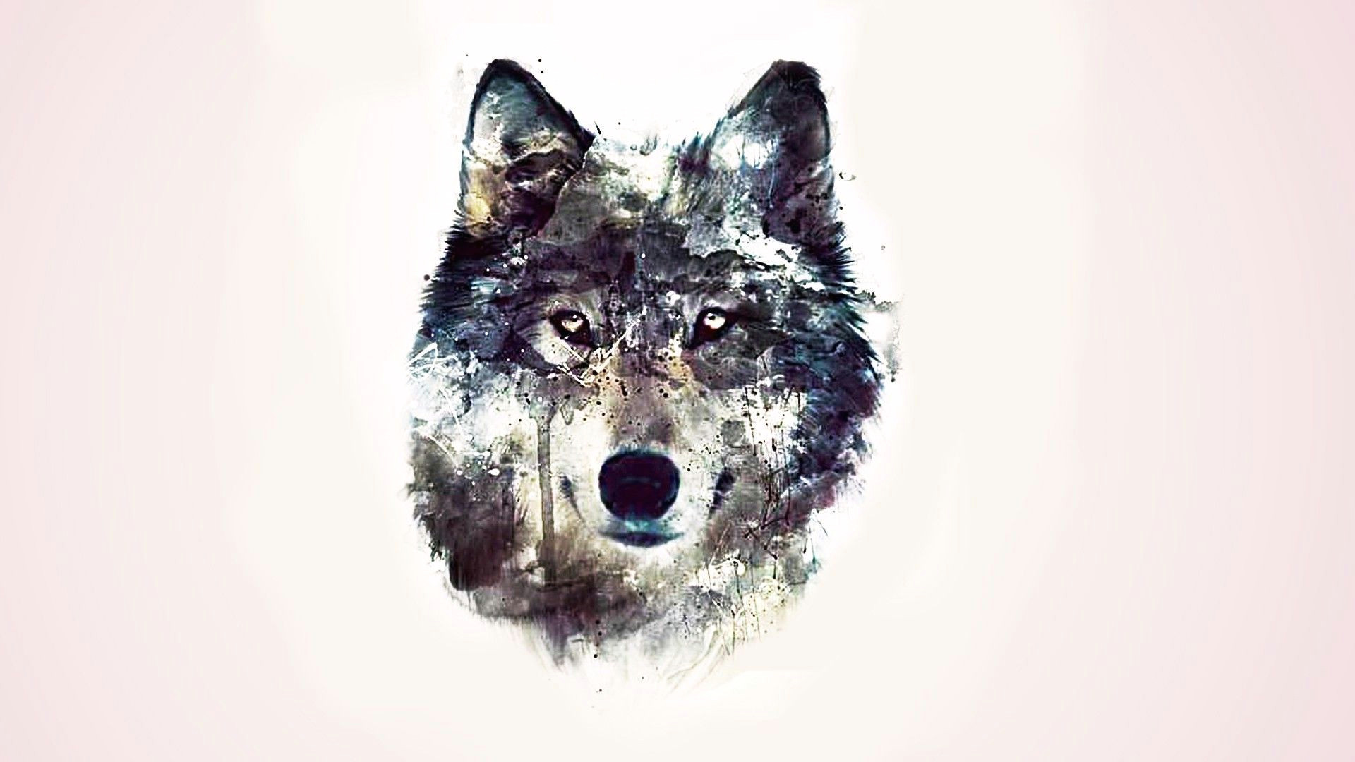 drawn wallpaper wolf pencil and in color drawn wallpaper wolf