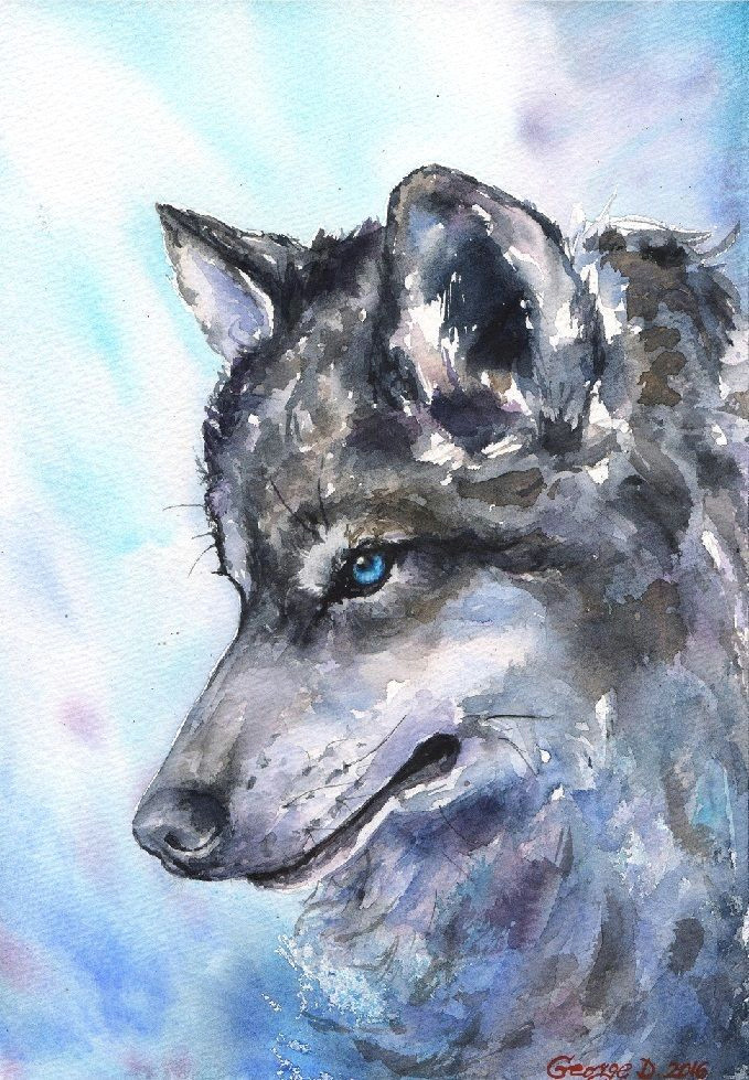 wolf north watercolor print of the original watercolor painting blue winter impressionism