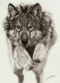 Wolf Jumping Drawing Die 2282 Besten Bilder Von Wolfe Phantasie Drawings Wolf