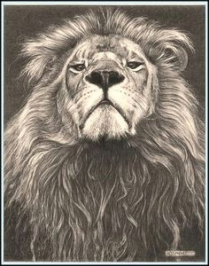 head of the family lion fine art pencil drawings