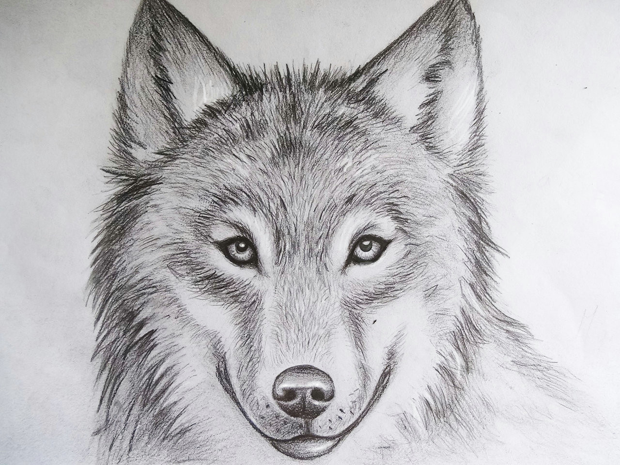 wolf drawing by imikeoakheart on clipart library