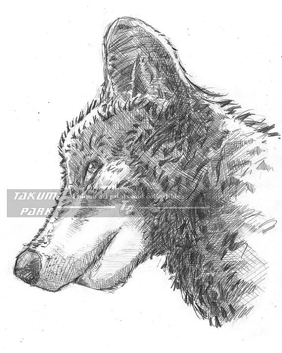looking for a gift for people who love wolves love wolves yourself this wolf artwork is a reproduction of an original pencil drawing
