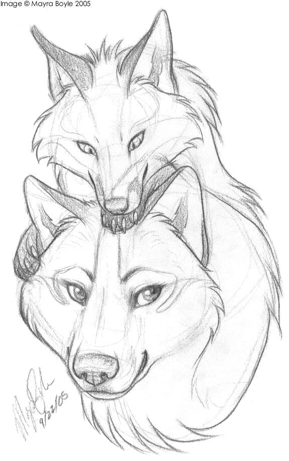 animal sketches animal drawings how to draw foxes how to draw wolf
