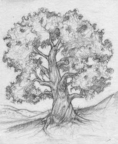tree drawing tree sketches tree drawings drawing trees drawing sketches sketching
