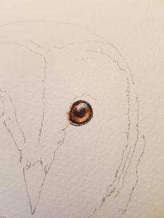 barn owl in 5 easy steps