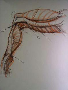 human anatomy for artists human anatomy drawing body drawing anatomy study anatomy