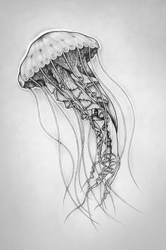 octopus sketch octopus drawing jellyfish drawing jellyfish art fish drawings animal