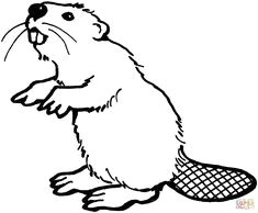 aa155018288ced31d572e478a37d8050 beaver scouts colouring pages jpg