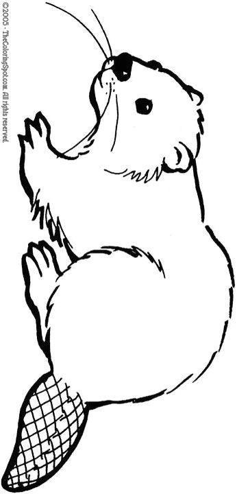 8a9506a0ce3cbf0cae624c69931db045 woodland animals beavers jpg
