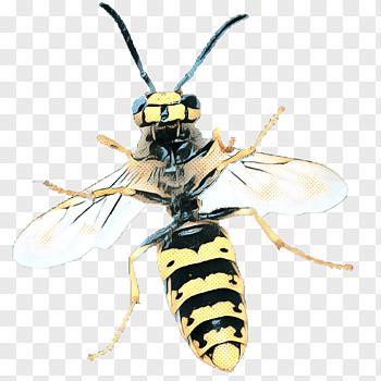cartoon bee hornet insect cockroach drawing wasp yellowjacket eumenidae png clip art thumbnail png