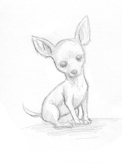 Collie Drawing Easy Easy Drawings Of Chihuahuas Google Search Chihuahua