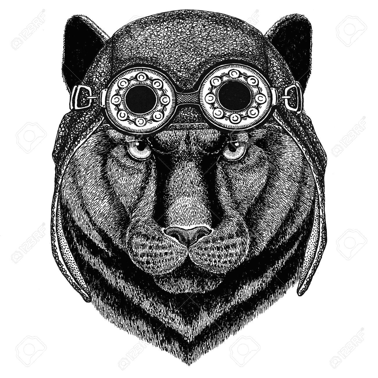 82108415 panther puma cougar wildkatze mit fliegerhut motorradhut mit brille f c3 bcr radfahrer illustration f c3 bcr motorrad od jpg