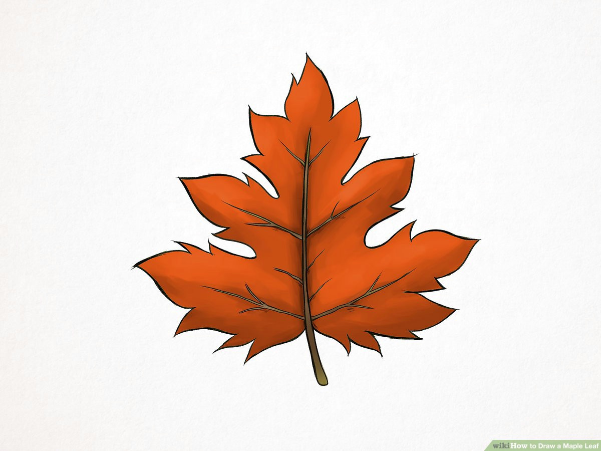 aid1565786 v4 1200px draw a maple leaf step 10 version 2 jpg