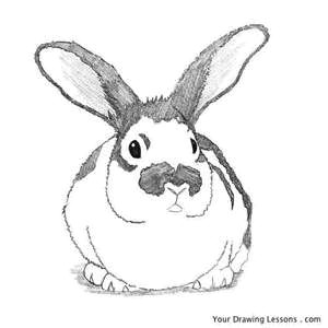Easy How to Draw A Bunny How to Draw Bunnies Bing Images Bunny Drawing Rabbit