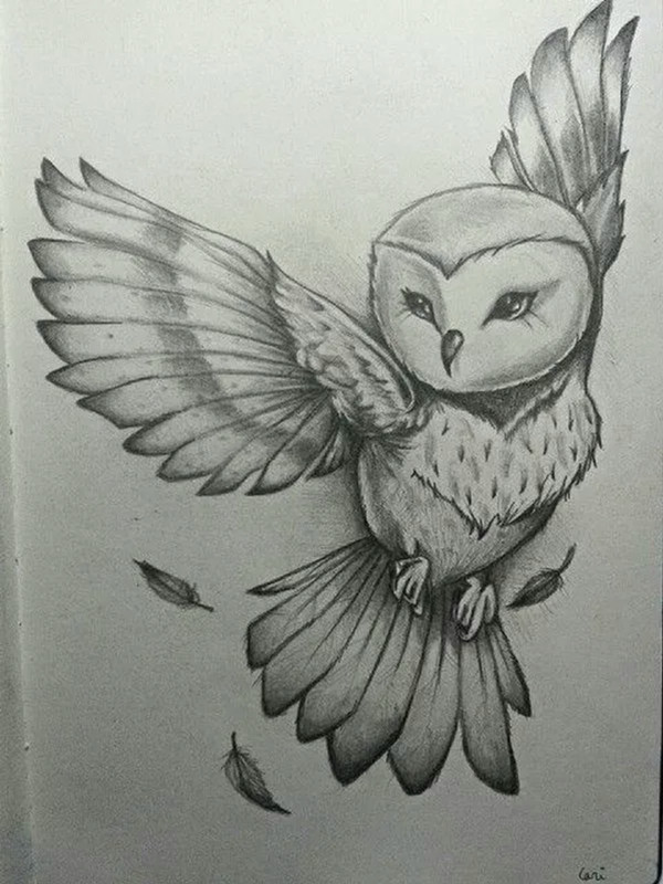 Easy Simple Owl Drawing 42 Simple and Easy Pencil Drawings Of Animals Buzz Hippy