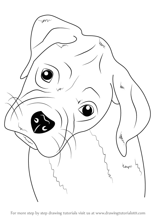 how to draw boxer puppy face step 0 png