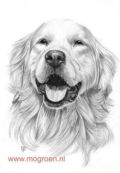 9998cfa700ebc3701e6d99b79a6080c2 animal drawings pencil drawings jpg