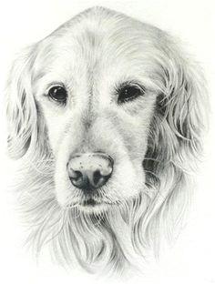 dd96a37fde952216859122c1855d9298 dog drawings pencil drawings jpg