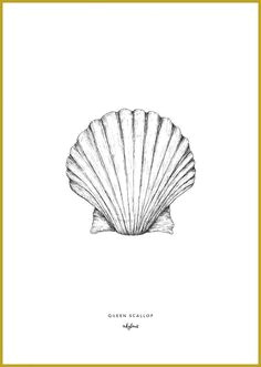 How to Draw A Clam Shell Easy Die 10 Besten Bilder Von Muschel Tattoo Muschel Tattoo
