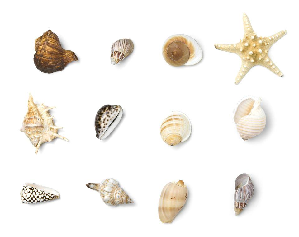 beach objects series 157437899 5ab1acbf18ba010037cb3c4c jpg