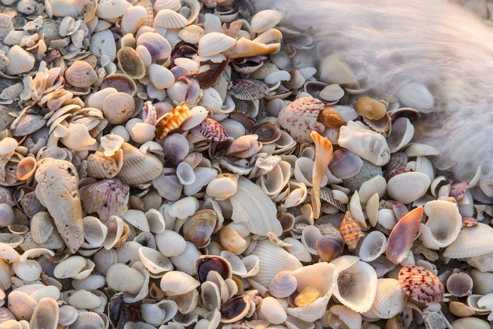 incoming surf and seashells on sanibel island florida usa 478154755 5900ff8a3df78c54563f272f jpg