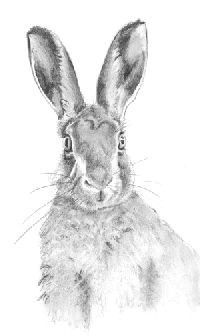 4d686c903b3f3226dcce3890a0e059a6 pencil drawings drawing ideas jpg