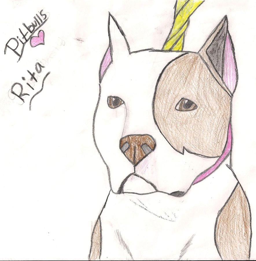rita the pitbull by iloveseekers d4phhcy jpg