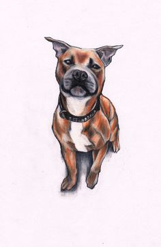 1ccdf62756c9d2a736ee0c1447165756 staffy dog staffordshire bull terriers jpg